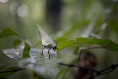 Unidentified Insect - Amapa, Brazil Stock Photos