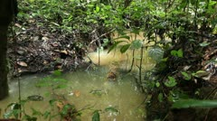 Pool in flooded rainforest Stock Footage