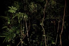 Parque nacional montanhas do tumucumaque, brazil Stock Photos