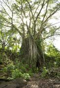 lelu ruins - kosrae, micronesia - stock photo