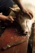 Preparing a feast - kosrae, micronesia Stock Photos