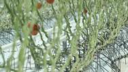 Greenhouse Stock Footage