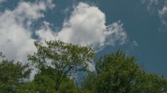 White Clouds Moving Behind Windy Green Trees in a Blue Sky Stock Footage