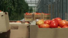 tomatoes in containers - stock footage