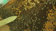 Beekeeper working with honeycombs Stock Footage