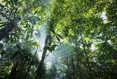 sun bursts through the canopy - amapa, brazil - stock photo