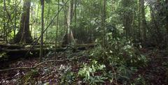 rainforest -  amapa, brazil - stock photo