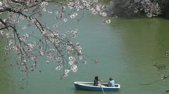 Beautiful Japanese cherry blossom near to a lake, Tokyo Stock Footage