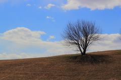 Tree isolated on hillside.JPG - stock photo