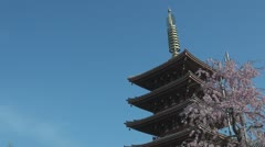 Sensoji Temple with Japanese cherry blossom, Tokyo Stock Footage