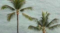 Hawaii - trooppisia palmuja palmtrees Arkistovideo