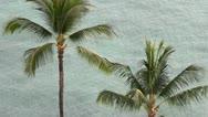 Hawaii - tropical palm trees palmtrees Stock Footage