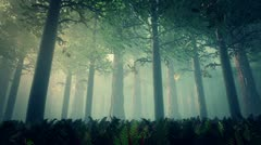 Stock Video Footage of Deep Forest Fairy Tale Scene 3D render