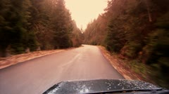 Driving among firs - stock footage