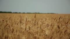 Harvest 006 Stock Footage