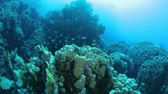 Marine Life in the Red Sea Stock Footage