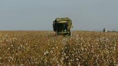 Cotton picking 5 Stock Footage