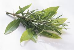 Stock Photo of Fresh Rosemary and Bay Leaves