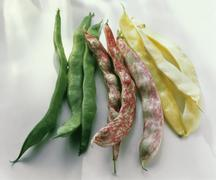 Three Varieties of Snap Beans: Green, Cranberry and Wax Stock Photos