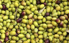 Olives (macro zoom), Perugia, Umbria, Italy Stock Photos