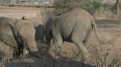 Young elephant on his knees Stock Footage