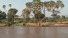Zoom in of elephants across a river Stock Footage