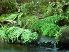 various waterside vegetation - stock photo