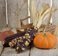 indian corn and pumpkin - stock photo