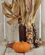 Indian corn and pumpkin Stock Photos