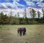 Langscape with horses Stock Photos