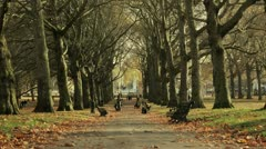 View of a tree-lined avenue in Green Park, London Stock Footage