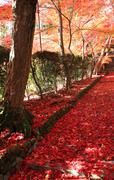 Autumn leaves in Japan - stock photo