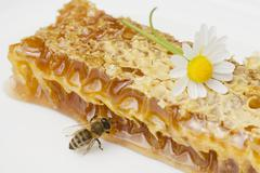 A honeycomb, a bee and a daisy - stock photo