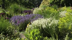 Woodland sage (Salvia nemorosa) and spurge (Euphorbia) - stock footage