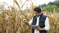 agronomist analysing cereals with electronic tablet - stock footage