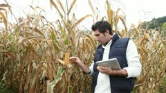 Stock Video Footage of agronomist analysing cereals with electronic tablet