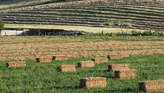 Farmscape with hay bales in field Stock Photos