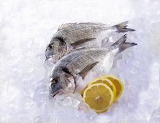 Two Dorades on ice with lemon slices Stock Photos