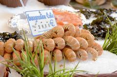 Keitetty hummeri markkinoilla Kuvituskuvat