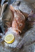 Fresh fish on ice with half a lemon Stock Photos