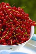 Stock Photo of Fresh red currants