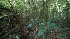 0038-Amazon Jungle Dense Forest 3 Stock Footage
