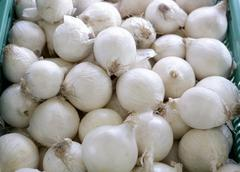 White onions in crates at the market - stock photo