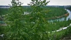River valley aerial with pine trees and snow Stock Footage
