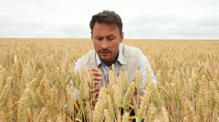 portrait of agronomist analysing wheat ears - stock footage