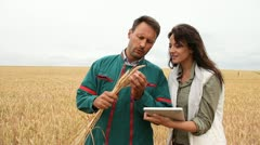 agronomist with farmer looking at wheat crop - stock footage