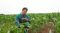 farmer with electronic tablet analysing corn field - stock footage