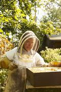 Stock Photo of Bee Keeping