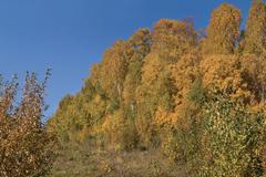 mellow autumn - stock photo