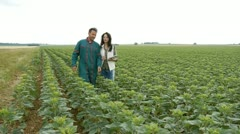 Farmer and researcher analysing sunflowers plant Stock Footage